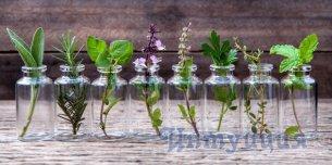Введение в ароматерапию
